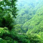 夏休みに家族で行きたい温泉旅行、行けば納得の穴場がいっぱいの強羅温泉
