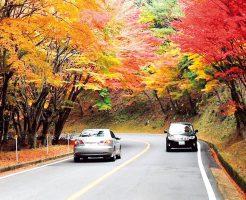 比叡山のドライブウェイ